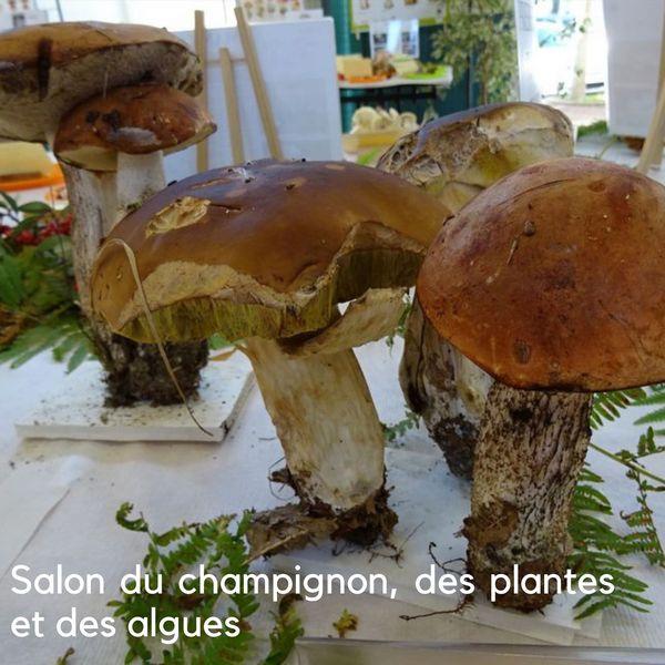 Salon du champignon, des plantes et des algues