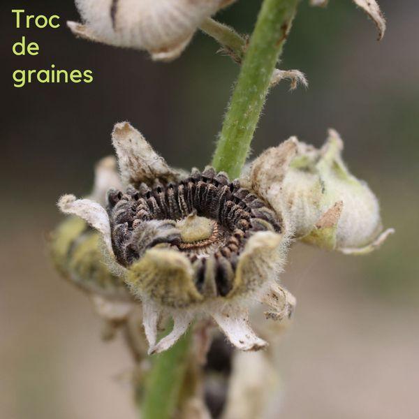 Troc de graines