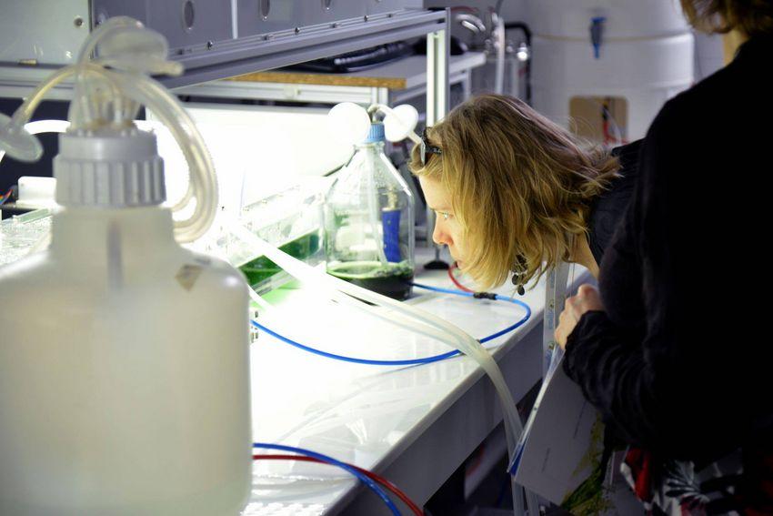 Algosolis, une plateforme expérimentale de production de microalgues quasi unique au monde, est installée à Saint-Nazaire.