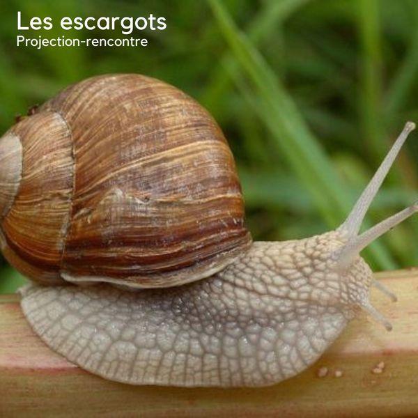 Projection-rencontre sur les escargots