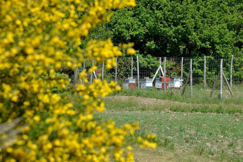 Les ruches du Prazillon (©Ville de Saint-Nazaire - Christian Robert)