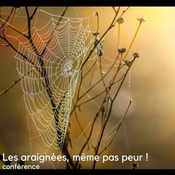 Les araignées, même pas peur!