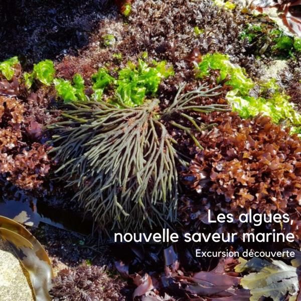 Les algues, nouvelles saveurs marines