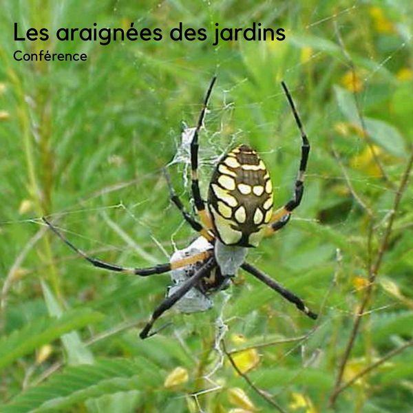Les araignées des jardins