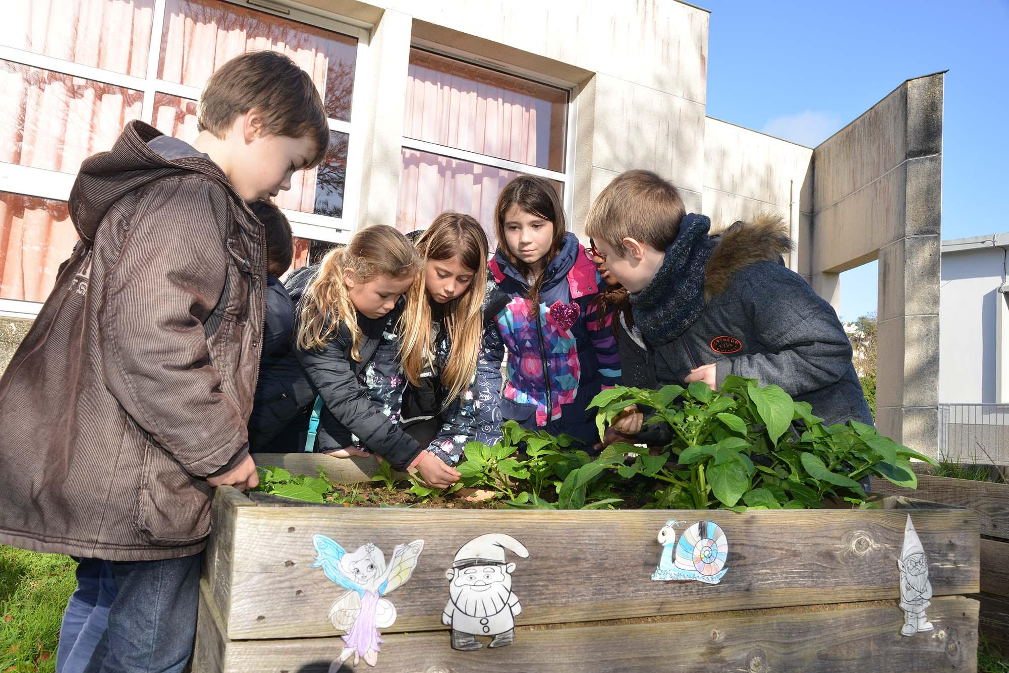 Les enfants de l'école Ferdinand Buisson cultivent leurs propres légumes. (©Ville de Saint-Nazaire - Christian Robert)