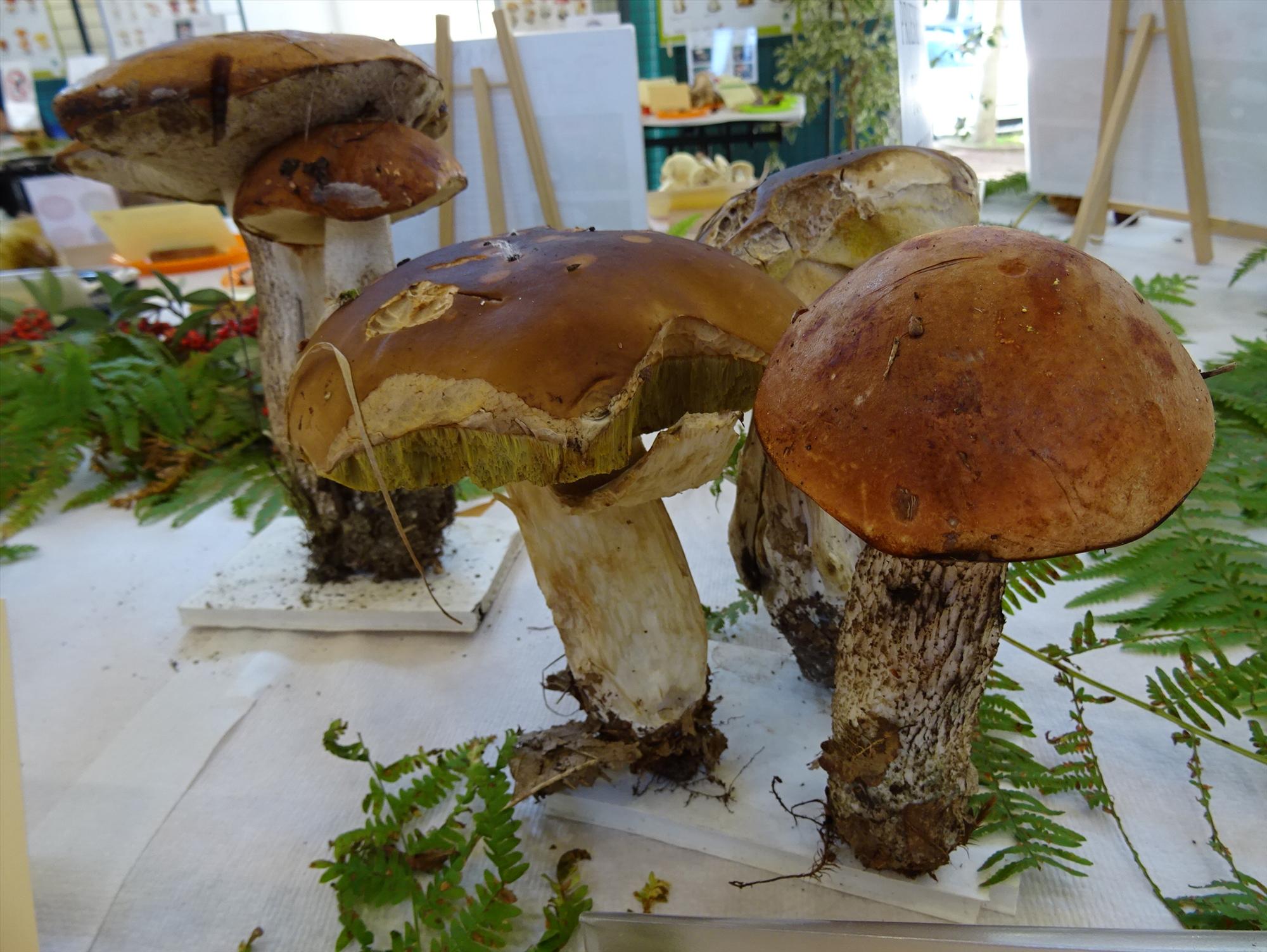 Salon du champignon plantes et algues